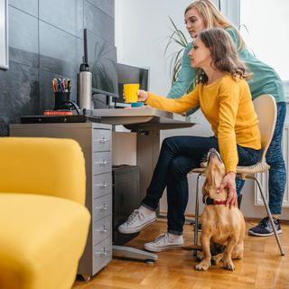 Razones para llevar a tu perro al trabajo