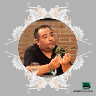 Defectos y virtudes de la ley cannabica argentina | Julio Rey (ACCA Uruguay)