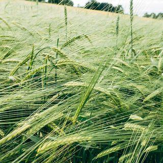 La Commissione UE vuole ricompensare le pratiche agricole rispettose del clima