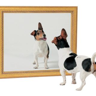 How Dogs Mirror Our Energy Show 82 The Mutt Master