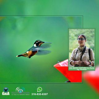 NUESTRO OXÍGENO La pasión por conservar las aves - Ana Maria Castaño-la Rana
