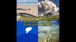 OVER 80,000 AFTERSHOCKS IN CALIFORNIA, 80 VOLCANOES ERUPTING OR ON ALERT, MASS ANIMAL DEATHS