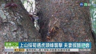 13:30 遭虎頭蜂螫傷 男昏迷送醫搶救不治 ( 2019-06-23 )