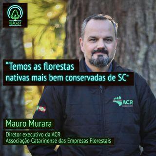 Santa Catarina possui as florestas nativas mais bem conservadas do país