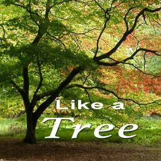 Psalm 1:2-3, Like a Tree