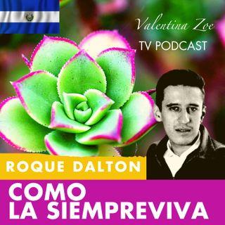 COMO LA SIEMPREVIVA 🌷🌄 ROQUE DALTON | Mi Poesía es como La Siempreviva Roque Dalton | Valentina Zoe