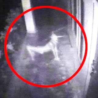 SKINWALKER RANCH - Possibly The Most Paranormal Activity Ever