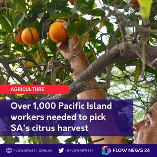 Mark Doecke from Citrus SA on needing 1,000+ Pacific workers to help on farms
