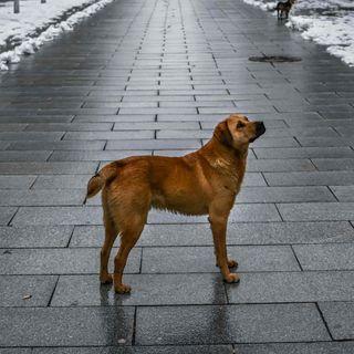 In Cina cani e gatti non si potranno più mangiare