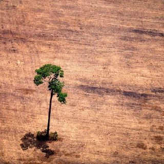 Amazon rainforest decline: Can we save the Lungs of the World?