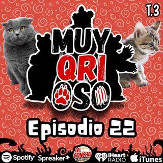 Muy Qrioso - Episodio 22 - Datos de gatos