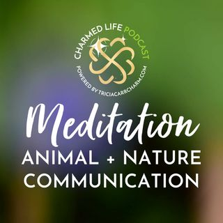 Meditation: Animal + Nature Communication