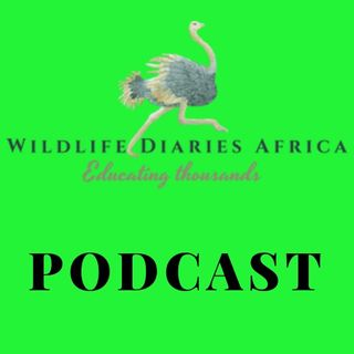 Welcome to Wildlife Diaries Africa  Podcast