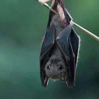 Buongiorno in connessione al pipistrello 🦇 la rinascita❣️