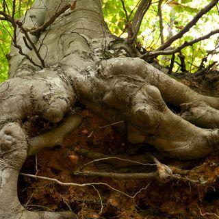 Christianity: Jewish Roots