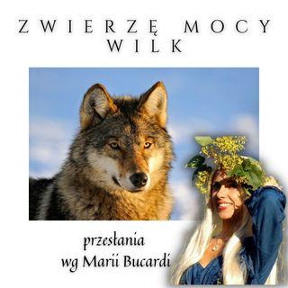 Zwierzę Mocy - Wilk - pewność siebie wiara w siebie| Maria Bucardi
