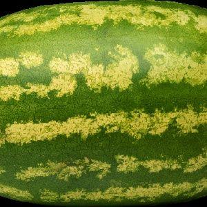 نظرية البطيخة