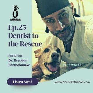 ANIMALIA 25 - Dentist to the Rescue - 11Jun21