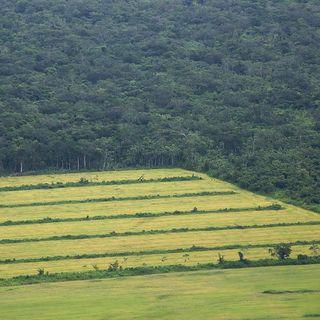 Amazzonia rovente. Così il boom agricolo accelera il cambiamento climatico