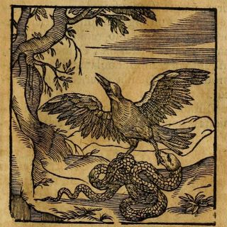 FFGF- The Serpent & The Eagle