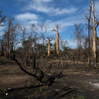 In Madagascar posti di lavoro contro i roghi nei parchi