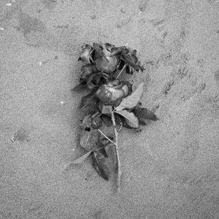 Episódio 34 - Emoções que só a fotografia nos faz sentir: German Lorca, Nego Miranda e literatura fotográfica