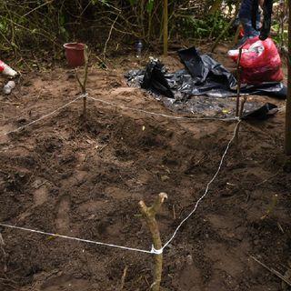 2020 registró una disminución del 33 % en el número de fosas clandestinas localizadas en México