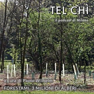 Puntata 33: tre milioni di alberi per fare di Milano una foresta