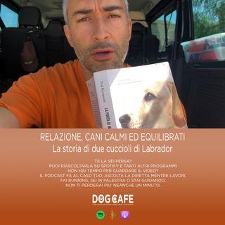 #039 - Relazione, cani calmi ed equilibrati: la storia di due cuccioli di Labrador.