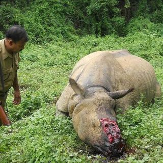 Poaching - the daily threat to park rangers