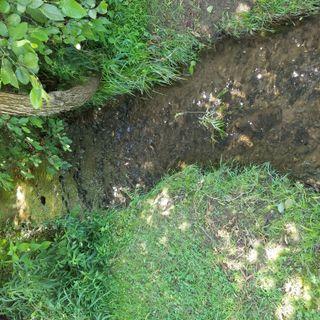 Dreaming Creek - Morning Manna #2562