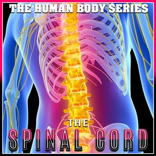 The Spinal Chord (The Human Body Series)
