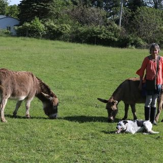 Life With Donkeys, From Simon To Lulu And Fanny