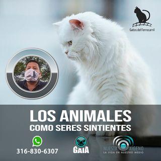NUESTRO OXÍGENO Los animales como seres sintientes - Jairo Marin Anaya