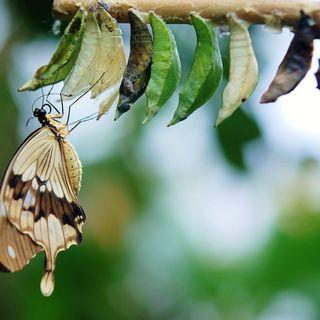 Puntata 4 - La buzzword è #trasformazione