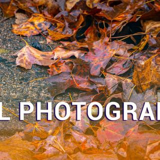 Hands-On Photography 50: Fall Photography Tips