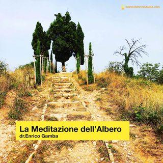 La Meditazione dell'Albero