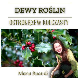 Dewy Roślin - Ostrokrzew kolczasty - otwieranie serca, ochrona progów i portali, strażnik progu | Maria Bucardi