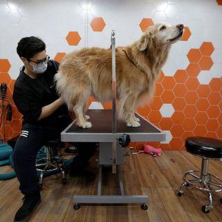 Pet economy, radiografia di un business in continua ascesa | Il cane istruito | Futurità