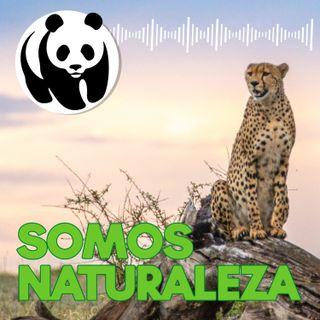 Somos naturaleza | El podcast de WWF España 🐼