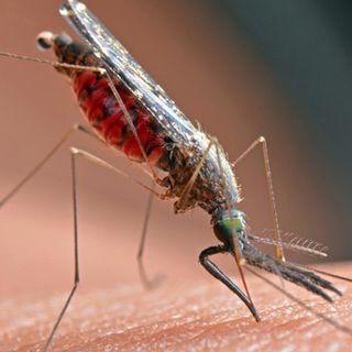 Malaria, il 20 agosto è 'Zanzara day'