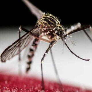 El dengue alcanza más de 2.7 millones de casos en AL
