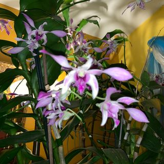 Episode 8 - Orchid Chat With Dr Connors