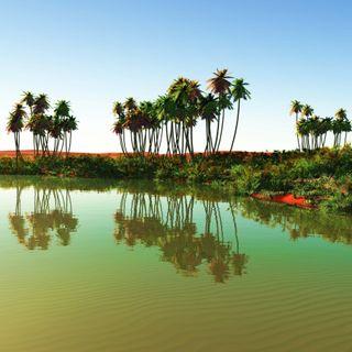 Oasen - Inseln der Wüste?