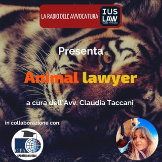 Animal Lawyer