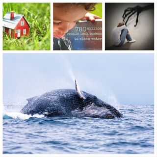 War on the Whales, Living with Less +
