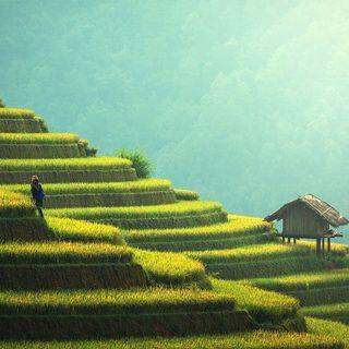 Laudato sì: la sfida della produzione di cibo
