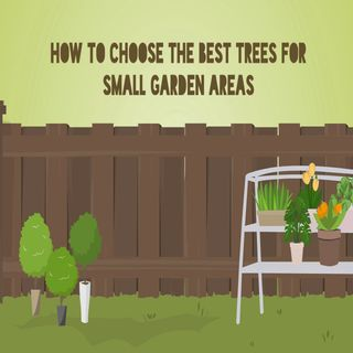 How To Choose The Best Trees For Small Garden Areas