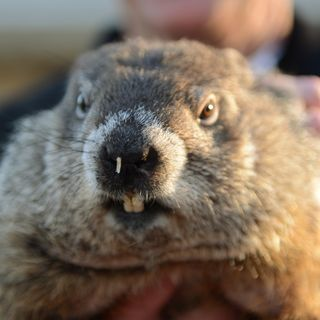 It's Groundhog's Day on the Flowerland Show!