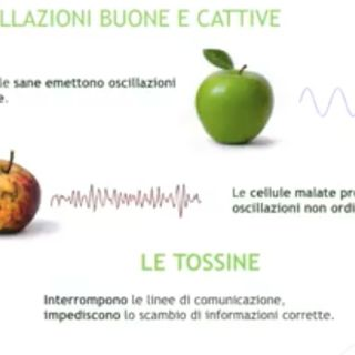 Fulvio Balmelli: Come si annullano le intolleranze alimentari con la biofisica